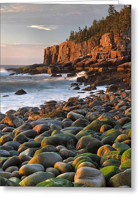 Otter Cliffs At Sunrise Greeting Card by Stephen  Vecchiotti