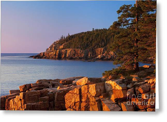 Mt Desert Island Greeting Cards - Otter Cliffs Maine Greeting Card by Brian Jannsen