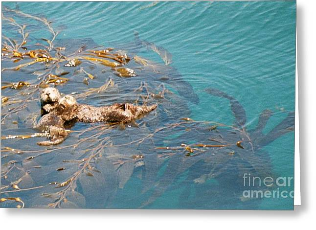 Point Lobos Greeting Cards - Otter Snooze Greeting Card by Johanne Peale