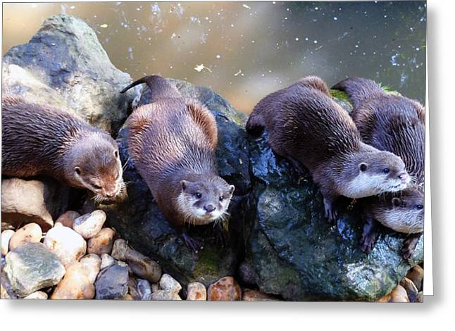 Beaver By Water Greeting Cards - Otters Greeting Card by Sharon Lisa Clarke