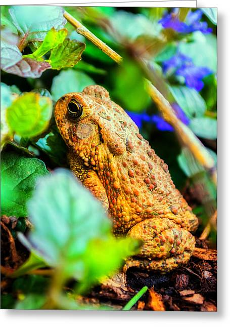 Our Backyard Visitor Greeting Card by Jon Woodhams