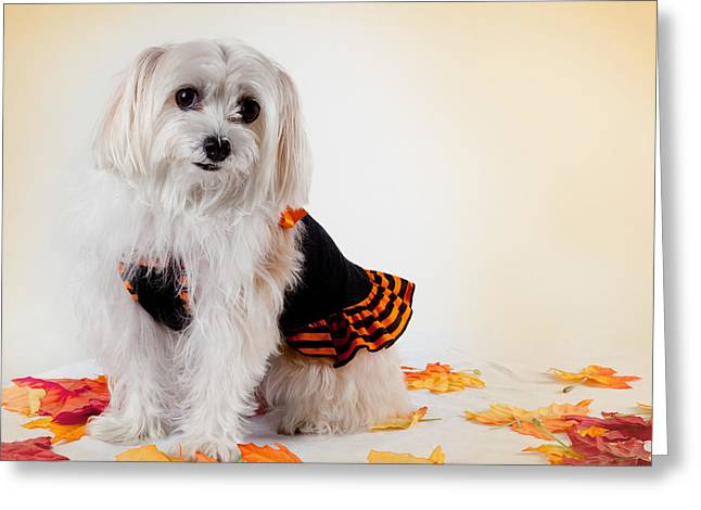 Maltese Photographs Greeting Cards - Our Best Friend Greeting Card by Michelle Wiarda