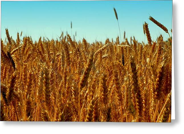 OUR DAILY BREAD Greeting Card by KAREN WILES