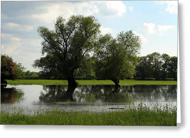River Flooding Greeting Cards - Ouse Flood  Greeting Card by Rachel  Slater