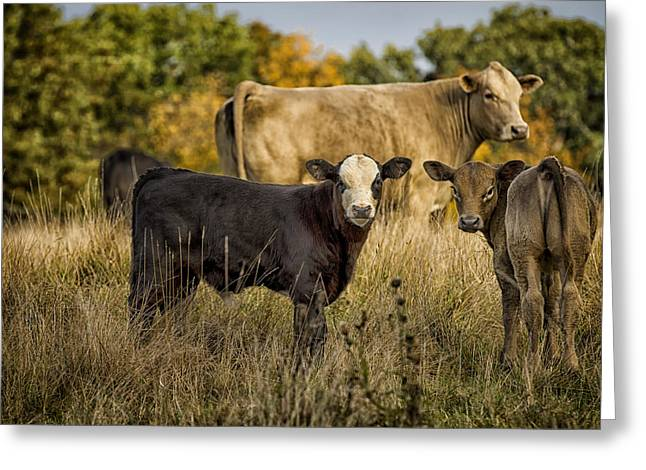 New Melle Greeting Cards - Out for a Graze Greeting Card by Linda Tiepelman