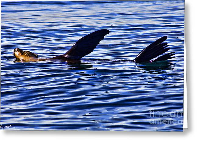 Best Sellers -  - California Sea Lions Greeting Cards - Out for a swim Greeting Card by Tommy Anderson