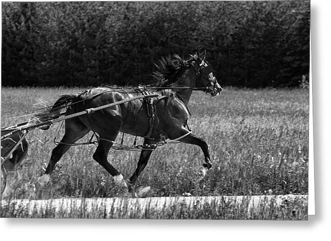 Harness Racing Greeting Cards - Out for a Workout Greeting Card by Mountain Dreams