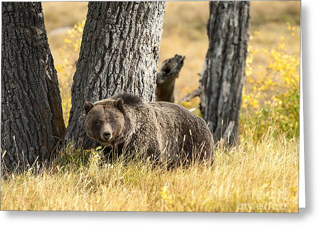 Wyoming Wildlife Greeting Cards - Out For Lunch Greeting Card by Sandra Bronstein