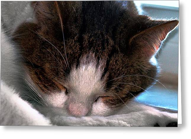 Photos Of Cats Digital Greeting Cards - Out for the Count Greeting Card by Dale   Ford