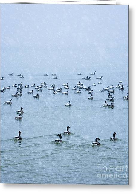 Canandaigua Lake Greeting Cards - Out Going Greeting Card by Roger Bailey