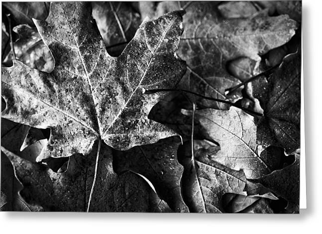 Fallen Leaf Greeting Cards - Out in the Cold Greeting Card by Christi Kraft