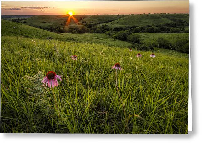 Green Beans Greeting Cards - Out In The Flint Hills Greeting Card by Scott Bean