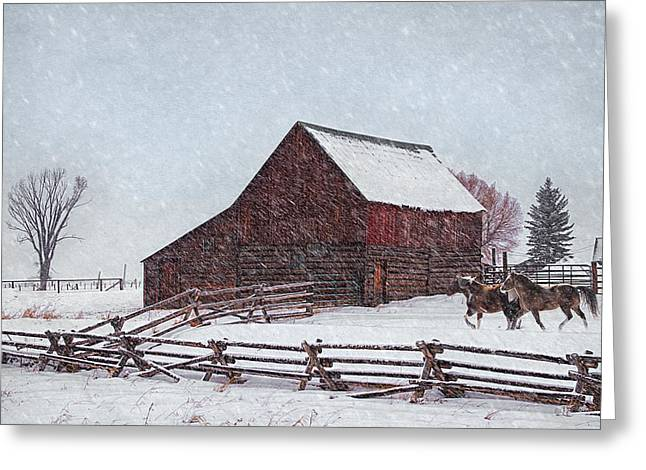 Wintry Greeting Cards - Out in the Snow Greeting Card by Priscilla Burgers