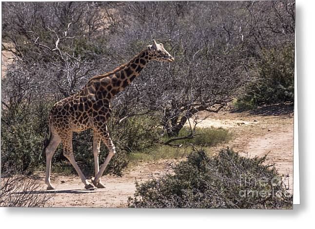 Out Of Africa Giraffe Greeting Card by Janice Rae Pariza