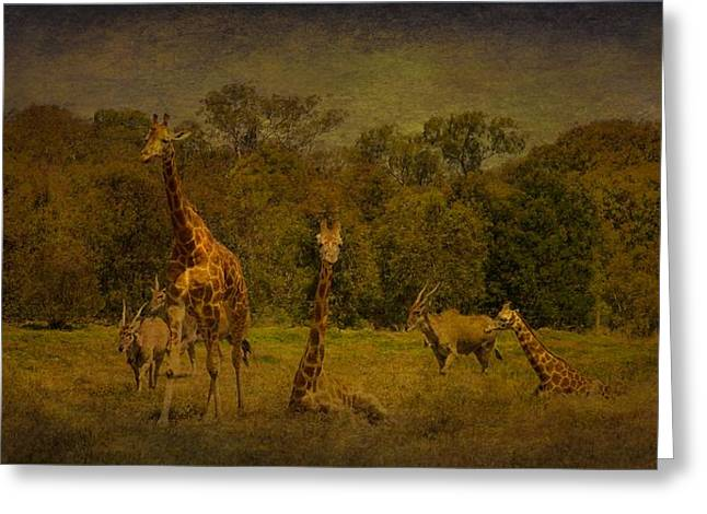 Shari Mattox Greeting Cards - Out Of Africa Greeting Card by Shari Mattox