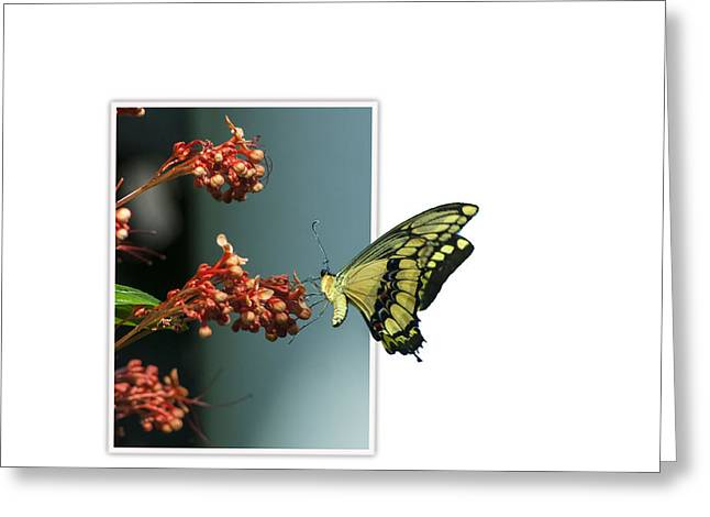 Creative Manipulation Photographs Greeting Cards - Out of Frame Butterfly Greeting Card by Ginger Harris