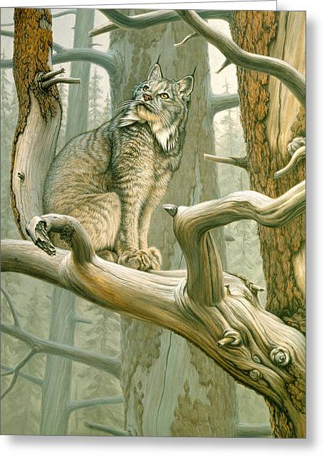 Old Tree Greeting Cards - Out of Reach - Lynx Greeting Card by Paul Krapf