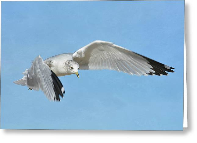 Ring-billed Gull Greeting Cards - Out Of The Blue 7 Greeting Card by Fraida Gutovich