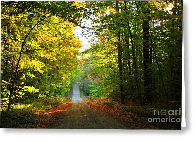 Season Greeting Cards - Out of the Dark Forest 2 Greeting Card by Terri Gostola