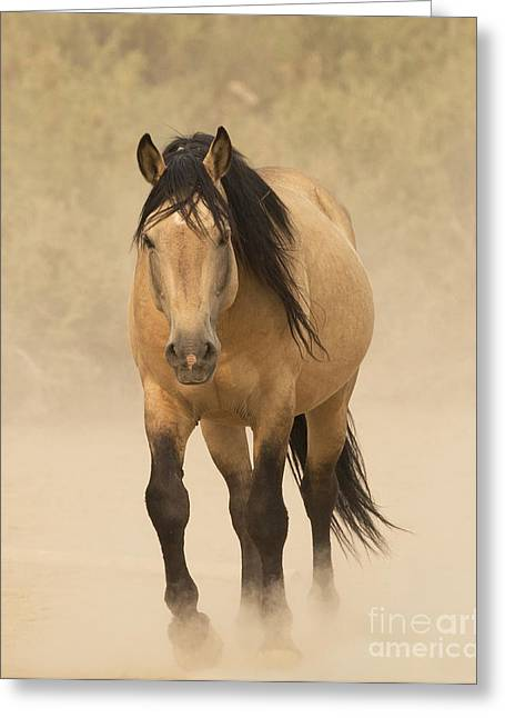 Wild Horse Greeting Cards - Out of the Dust Greeting Card by Carol Walker