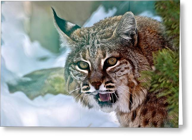 Bobcats Greeting Cards - Out of the Mist Greeting Card by Betty Arnold