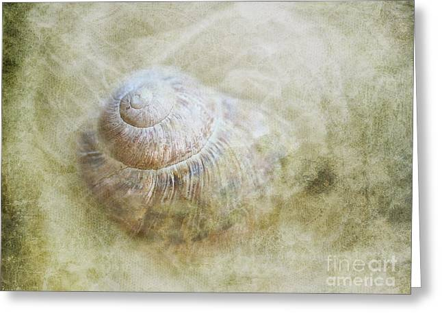 Shell Texture Greeting Cards - Out of the mist Greeting Card by Jan Pudney