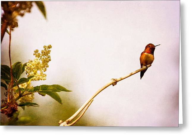 Bird On Tree Mixed Media Greeting Cards - Out on a Limb Greeting Card by Peggy Collins