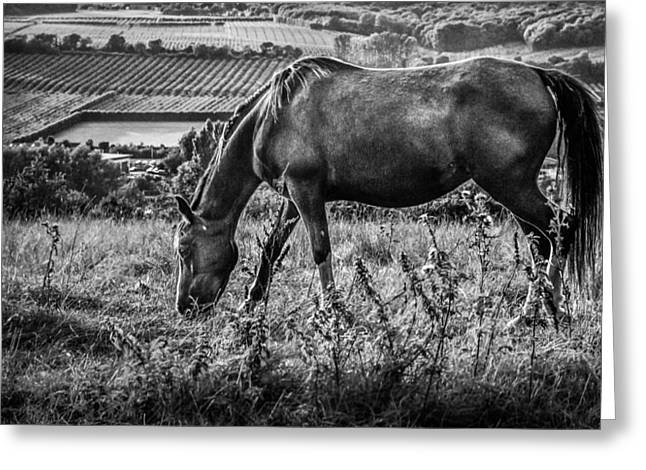 Wild Horses Photographs Greeting Cards - Out to grass Greeting Card by Ian Hufton