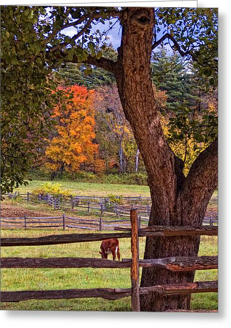 New England Village Scene Greeting Cards - Out to Pasture Greeting Card by Joann Vitali