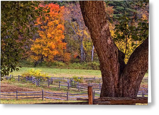Out to Pasture Greeting Card by Joann Vitali