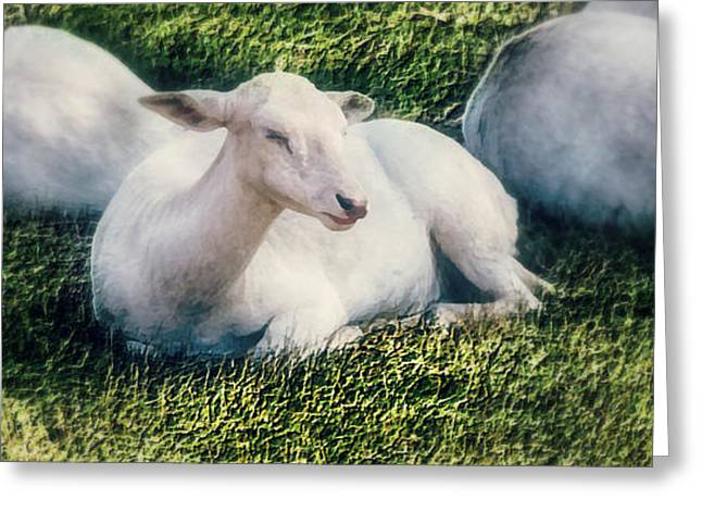 Out To Pasture Greeting Card by Melanie Lankford Photography