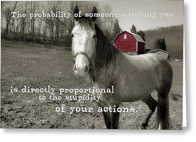 Stupidity Greeting Cards - OUT TO PASTURE quote Greeting Card by JAMART Photography