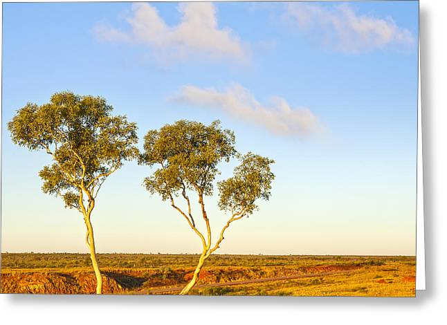 Western Australia Greeting Cards - Outback Australia Ghost Gums Greeting Card by Colin and Linda McKie