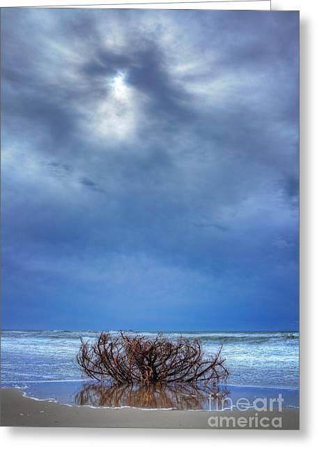 Driftwood Beach Greeting Cards - Outer Banks - Driftwood Bush on Beach in Surf I Greeting Card by Dan Carmichael