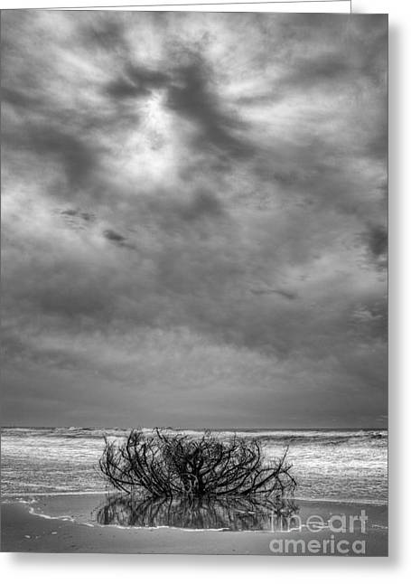 Driftwood Beach Greeting Cards - Outer Banks - Driftwood Bush on Beach in Surf III Greeting Card by Dan Carmichael