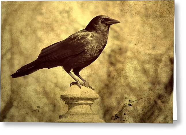 Ravens In Graveyard Greeting Cards - Outlook Greeting Card by Gothicolors Donna Snyder