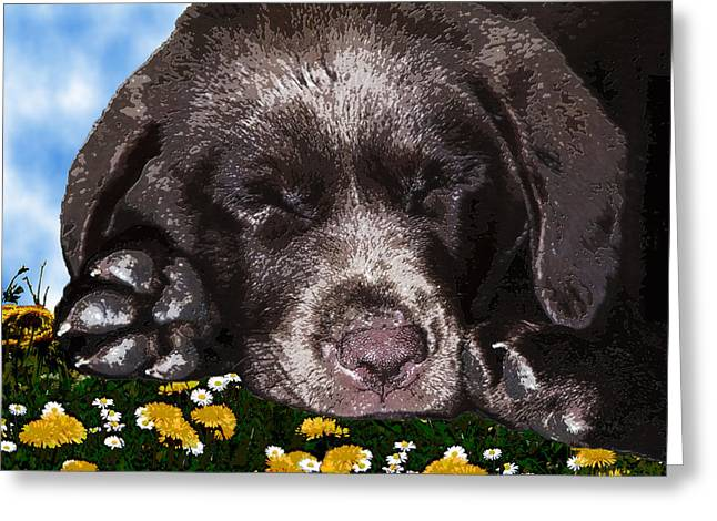 Retriever Prints Digital Art Greeting Cards - Outside Portrait of a Chocolate Lab Puppy  Greeting Card by Chris Goulette