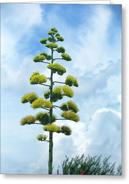 Crape Greeting Cards - Outstanding Blooming Agave Plant Greeting Card by Linda Phelps