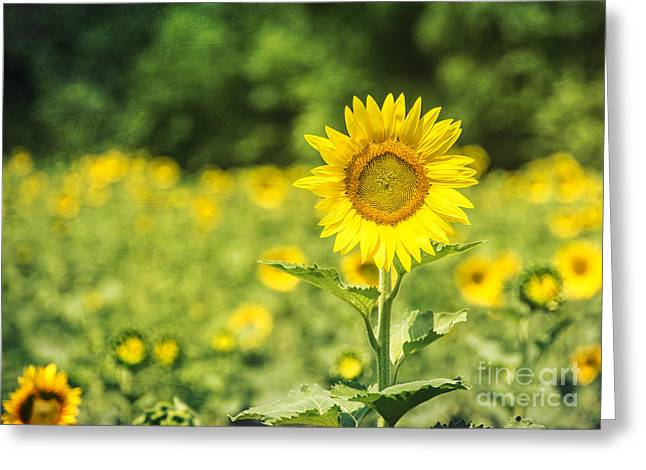 Outstanding In Her Field Greeting Card by Terry Rowe