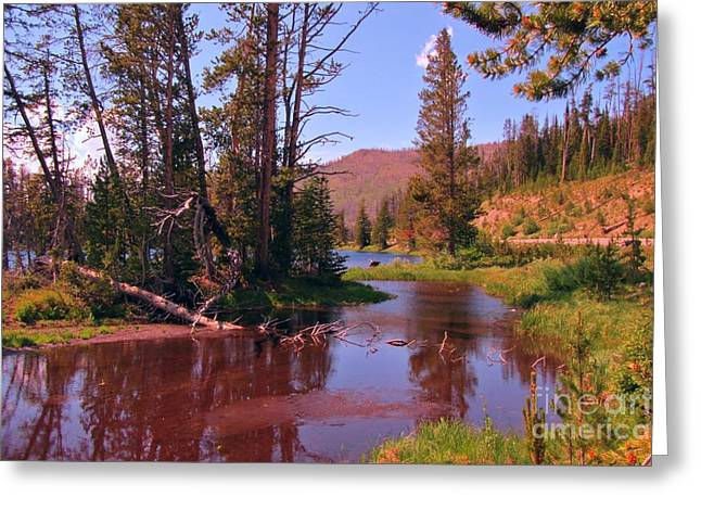 Reflections Of Trees In River Photographs Greeting Cards - Outstanding Yellowstone National Park Greeting Card by John Malone