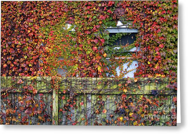 Over the Back Fence Greeting Card by Paul W Faust -  Impressions of Light