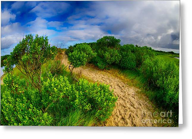 Mink Greeting Cards - Over the Beaten Path Greeting Card by Mark Miller