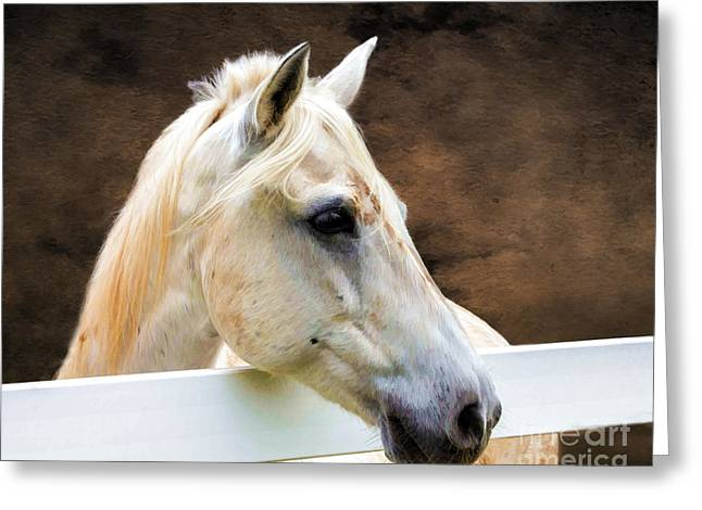 Tn Greeting Cards - Over The Fence - Digital Art Greeting Card by TN Fairey