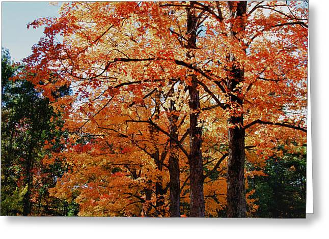 Over the hill and through the trees Greeting Card by Jeff Folger