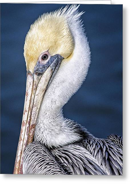 Pelicans Over Ocean Greeting Cards - Over the Shoulder Greeting Card by Peg Runyan
