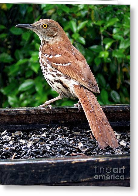 Photos Of Birds Greeting Cards - Over The Shoulder Greeting Card by Skip Willits