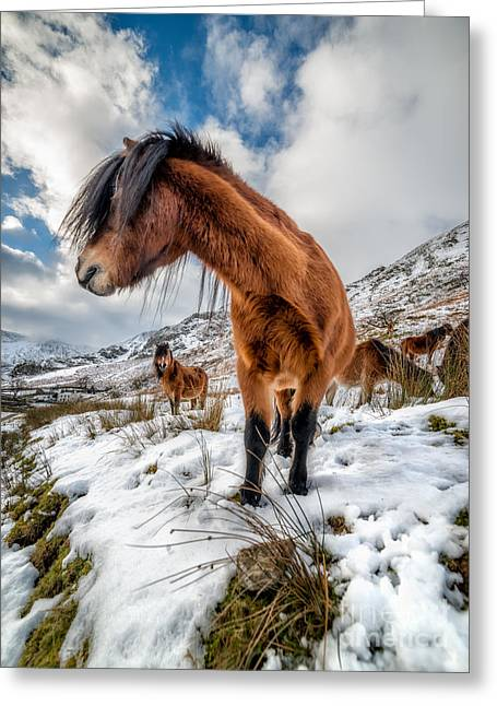 Graze Greeting Cards - Over There Greeting Card by Adrian Evans