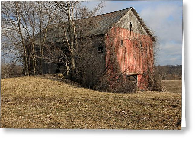 Old Barns Greeting Cards - Overgrown Barn Greeting Card by Jeff Roney