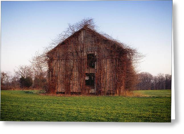 Recently Sold -  - Not In Use Greeting Cards - Overgrown Brush on Barn Greeting Card by Mountain Dreams
