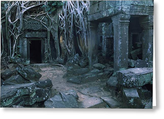 Overgrown Tree Roots On Ruins Greeting Card by Panoramic Images